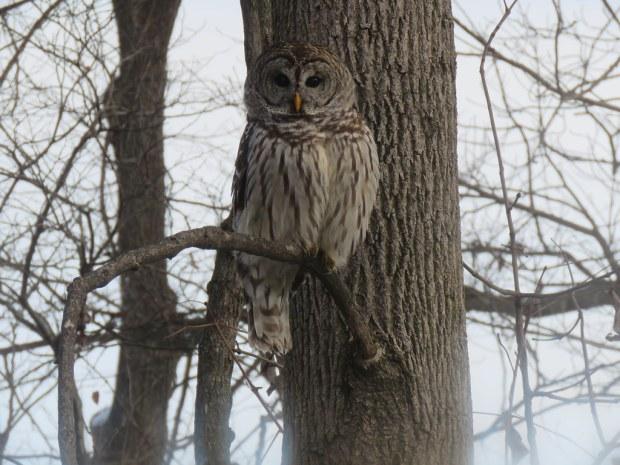 owl through window